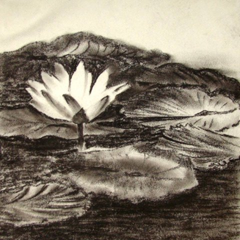 'Lotus' Work in charcoal